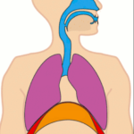 Persistent Bad Breath As Result of Poor Oral Hygiene