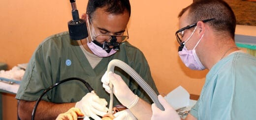 licensing dental therapists