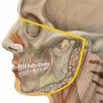 Results of Orofacial Pain Research